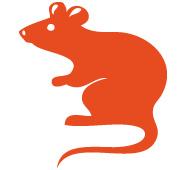 Tierkreiszeichen Ratte