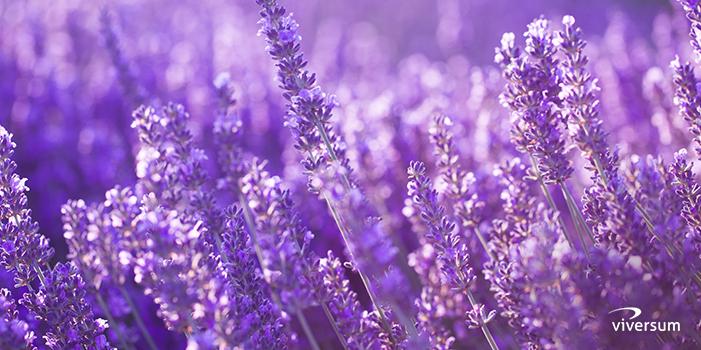 Bedeutung lila farbe Violett